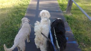 dog training courses and dog evolution