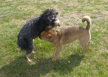 sexual dog behaviour in dog training