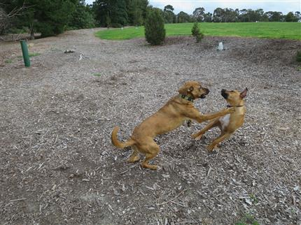 random dogs playing