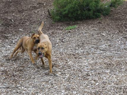 andom dogs playing