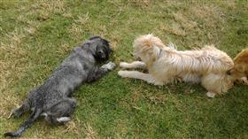 dog training children