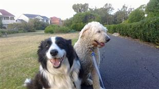 dog training evolution