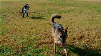 dog training courses social dogs
