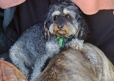 maternal_behavior in dogs during training