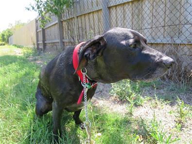 attention seeking behavior dogs