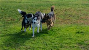 Top dog training dogs