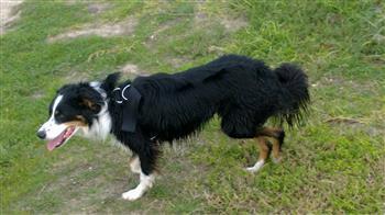 dog socialization via dog walking dog courses