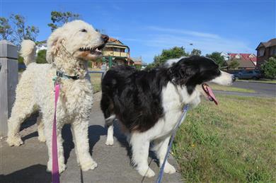 nature v nurture dog training